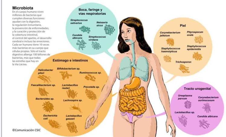 Bacterias del cuerpo
